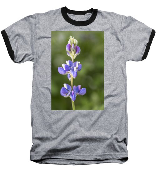 Little Lupine Baseball T-Shirt