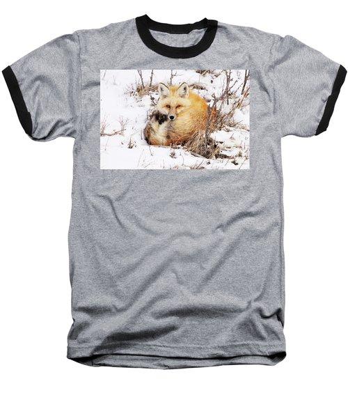 Little Red Fox Baseball T-Shirt