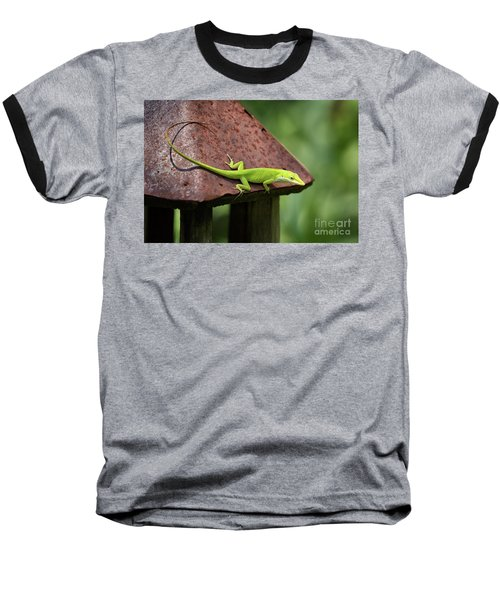 Lizard On Lantern Baseball T-Shirt by Stephanie Hayes