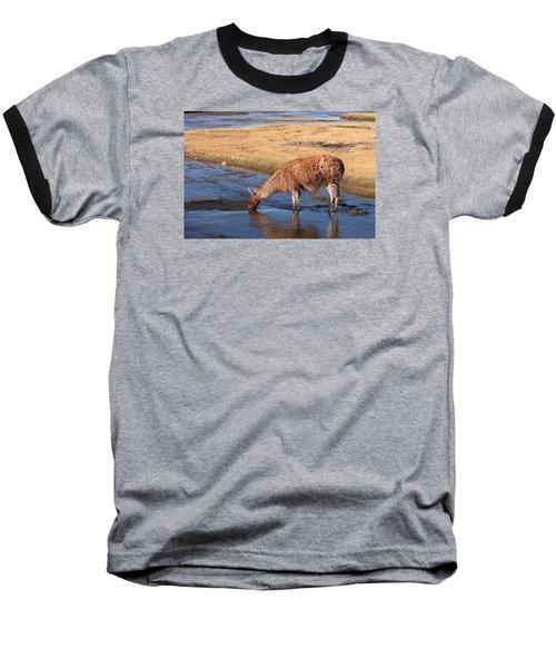 Llama Drinking In River Baseball T-Shirt by Aivar Mikko