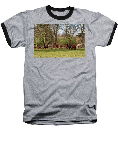 Baseball T-Shirt featuring the photograph Alpacas In Scotland by Jeremy Lavender Photography