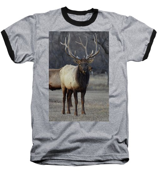 Baseball T-Shirt featuring the photograph Lone Bull by Billie Colson