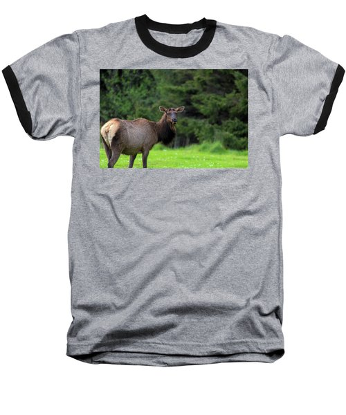 Lone Elk At Ecola State Park Baseball T-Shirt
