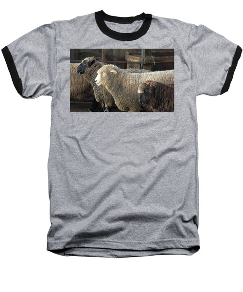 Looking For The Shepherd Baseball T-Shirt
