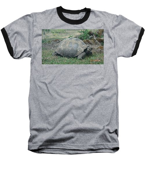 Looking Baseball T-Shirt by Will Burlingham