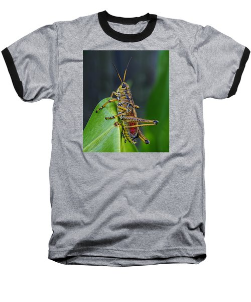 Lubber Grasshopper Baseball T-Shirt