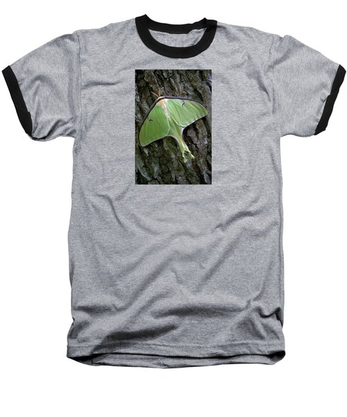Luna Moth Baseball T-Shirt by Marie Hicks