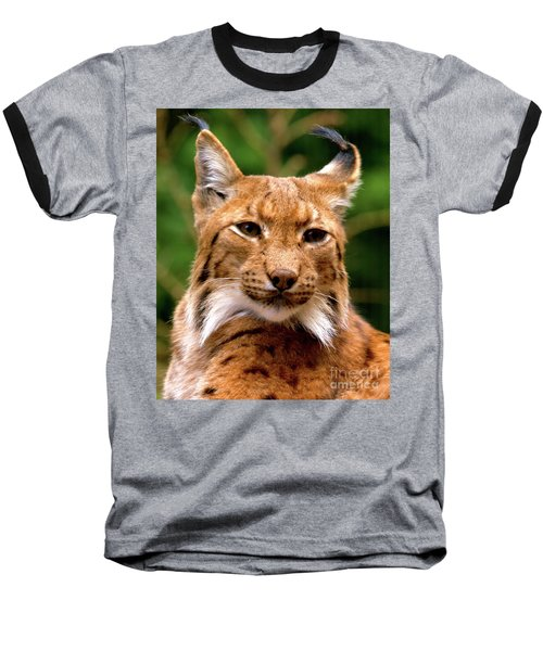 Lynx Portrait Baseball T-Shirt by Baggieoldboy