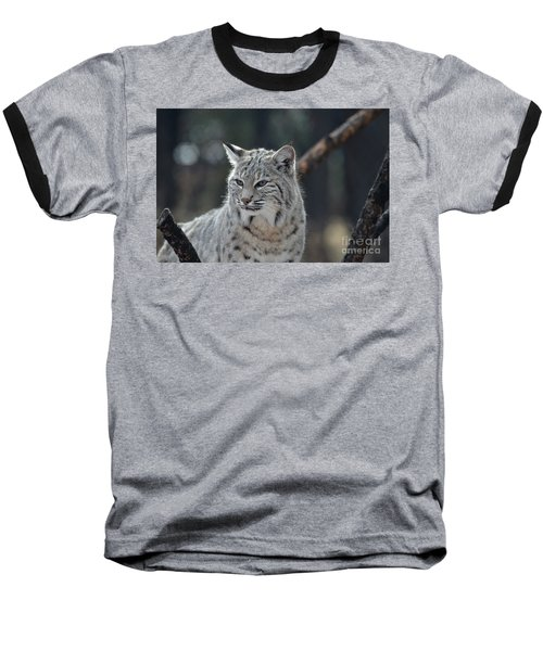Lynx With A Very Unhappy Face Baseball T-Shirt by DejaVu Designs