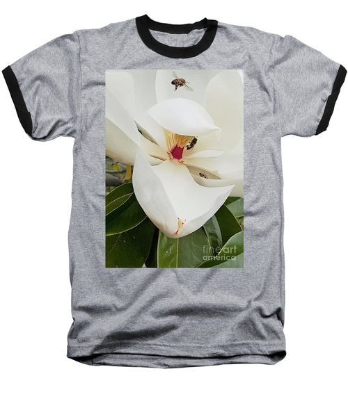 Magnolia Fans Baseball T-Shirt by Jasna Gopic