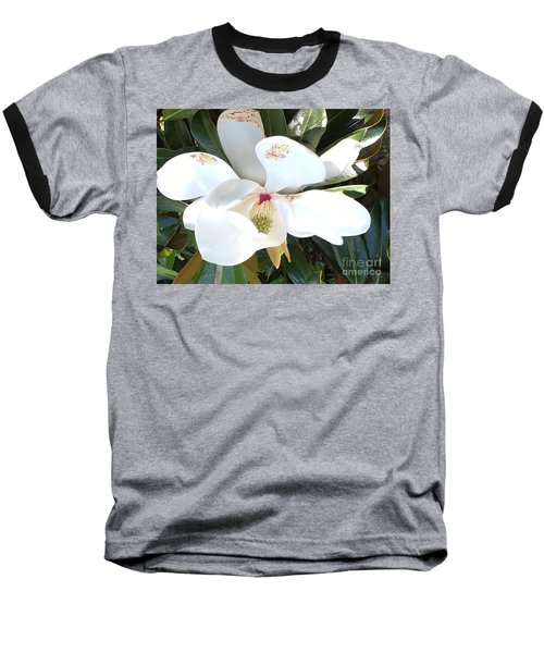 Magnolia Tree Bloom Baseball T-Shirt by Debra Crank