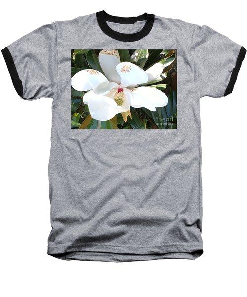 Magnolia Tree Bloom Baseball T-Shirt