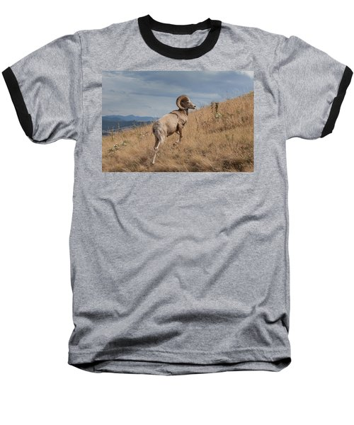 Baseball T-Shirt featuring the photograph Majestic Bighorn  by Fran Riley