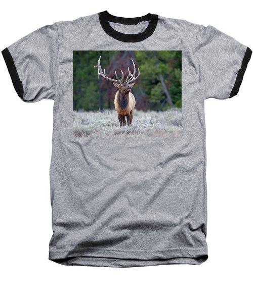 Majestic Bull Elk Baseball T-Shirt by Jack Bell