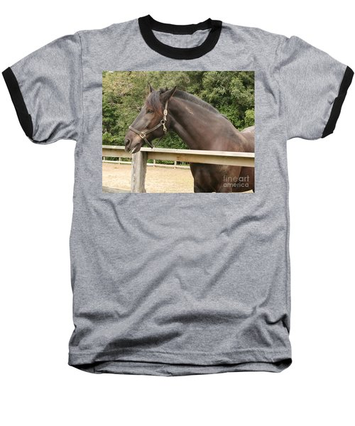 Majestic Horse  Baseball T-Shirt
