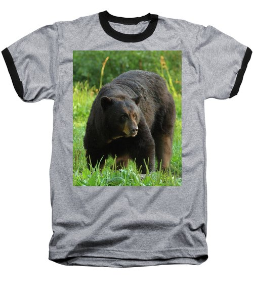 Male Black Bear In Late Light Baseball T-Shirt