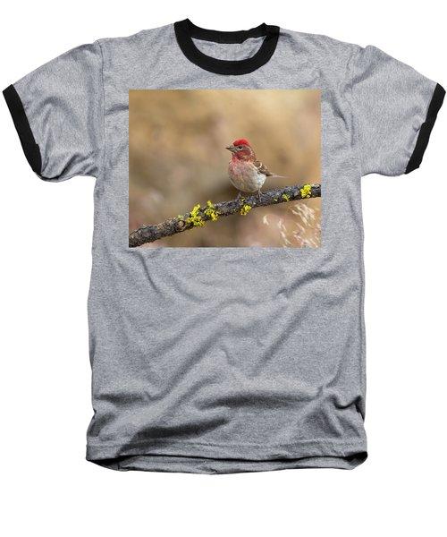 Male Cassins Finch Baseball T-Shirt