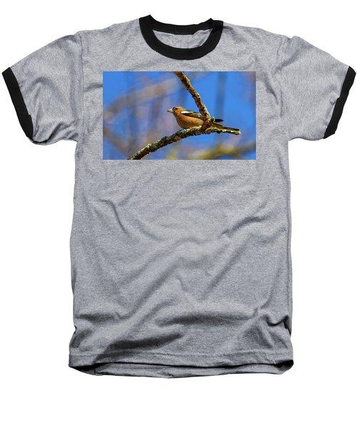 Male Common Chaffinch Bird, Fringilla Coelebs Baseball T-Shirt