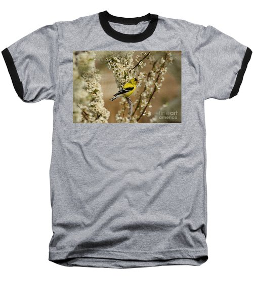 Male Finch In Blossoms Baseball T-Shirt by Cathy  Beharriell