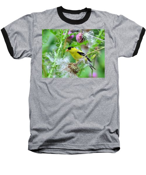 Male Goldfinch Baseball T-Shirt by Kathy Eickenberg