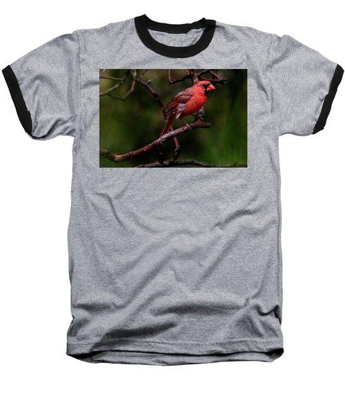 Male Northern Cardinal Baseball T-Shirt
