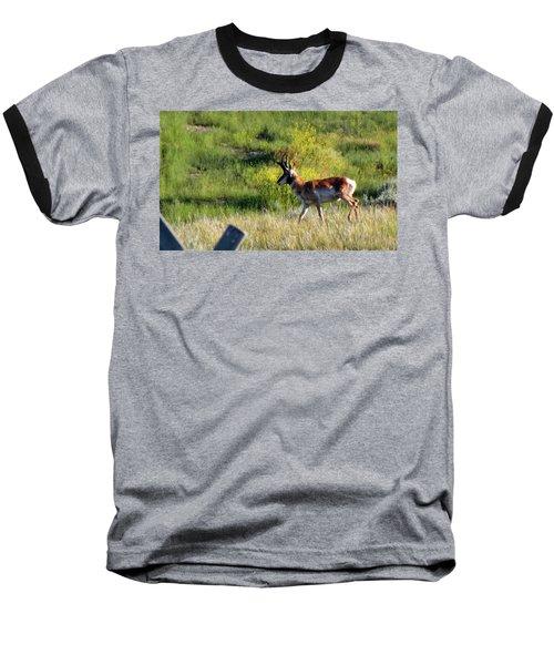 Male Pronghorn Baseball T-Shirt by C Sitton