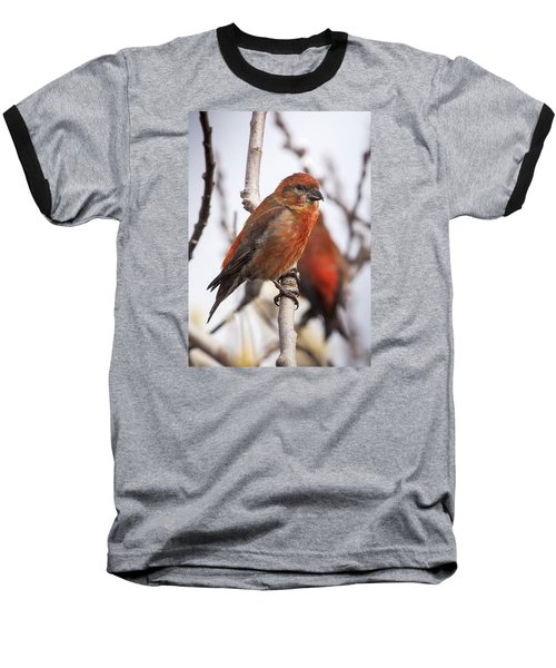 Male Red Crossbills Baseball T-Shirt by Robert Potts
