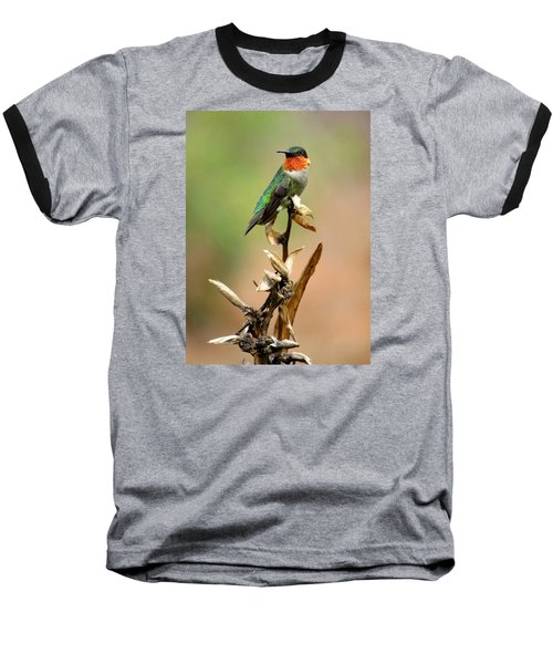 Baseball T-Shirt featuring the photograph Male Ruby Throat Hummingbird by Phyllis Beiser