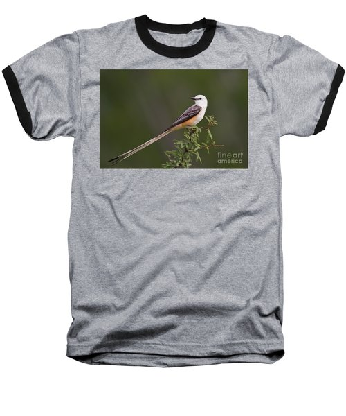 Male Scissor-tail Flycatcher Tyrannus Forficatus Wild Texas Baseball T-Shirt by Dave Welling