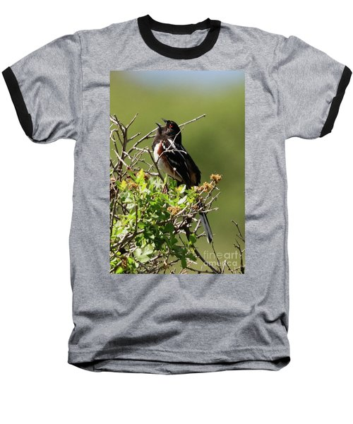 Male Spotted Towhee Baseball T-Shirt