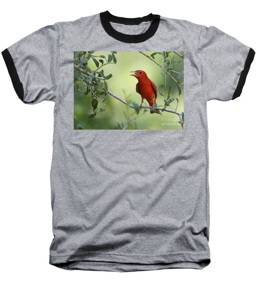 Male Summer Tanager Baseball T-Shirt