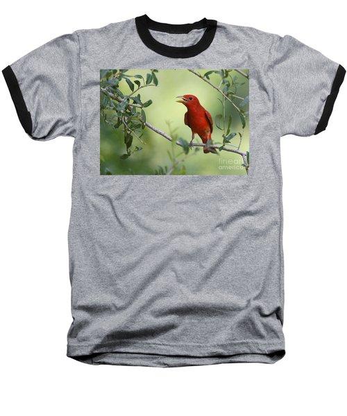 Male Summer Tanager Baseball T-Shirt