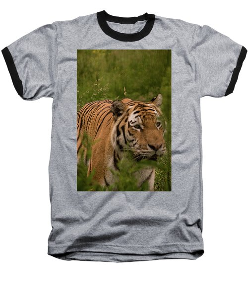 Male Tiger Baseball T-Shirt