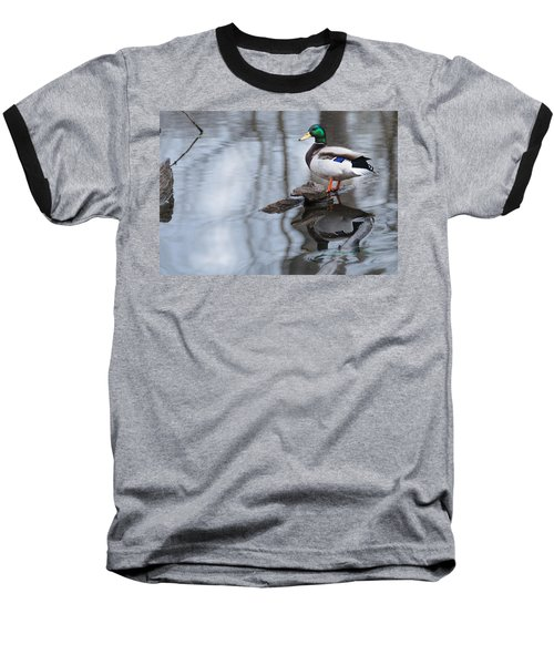 Mallard Drake Baseball T-Shirt by Edward Peterson