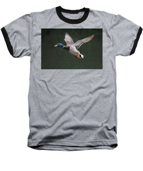 Mallard Drake In Flight Baseball T-Shirt