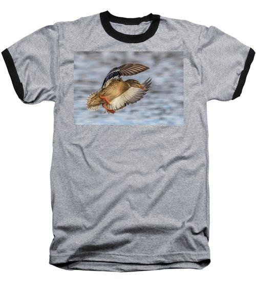 Mallard With Cupped Wings Baseball T-Shirt by Paul Freidlund