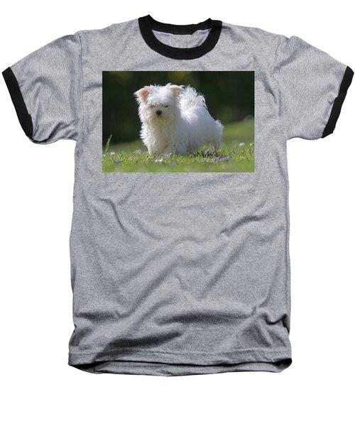 Maltese And Daisy Baseball T-Shirt