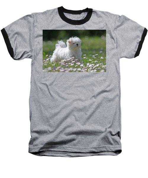 Maltese Baseball T-Shirt