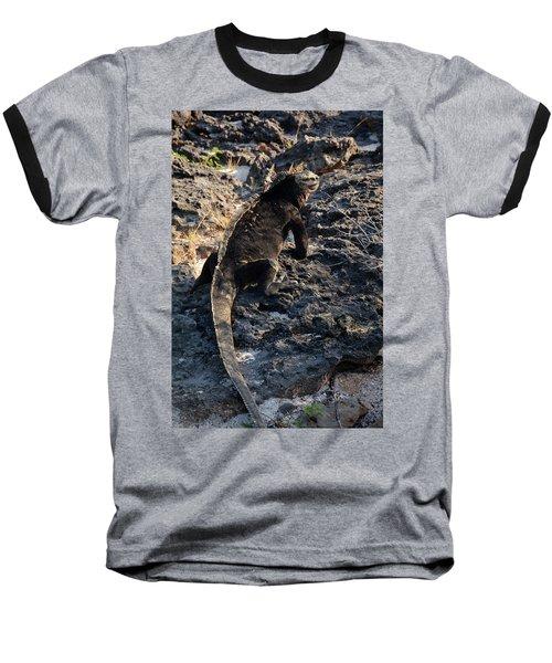 Marine Iguana, Amblyrhynchus Cristatus Baseball T-Shirt