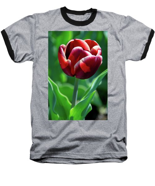 Maroon Tulip Baseball T-Shirt