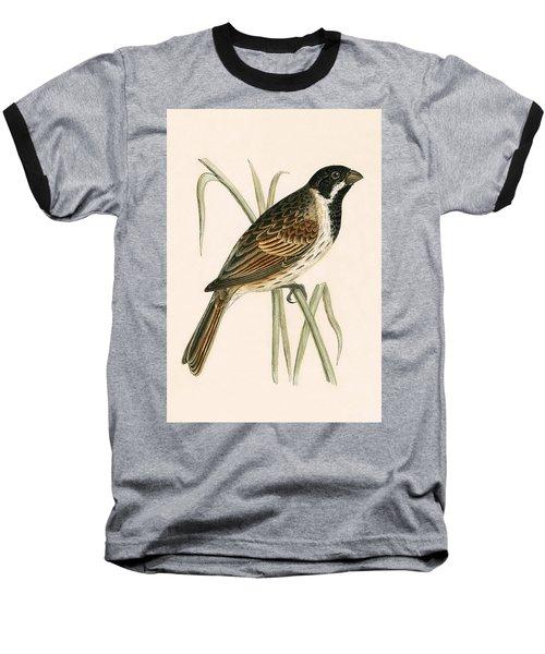 Marsh Bunting Baseball T-Shirt