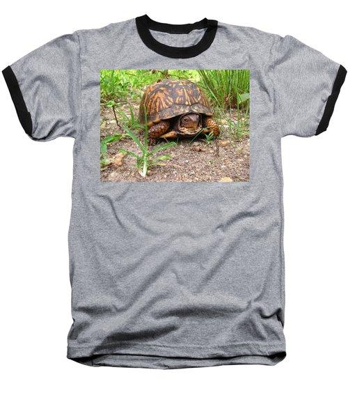 Maryland Box Turtle Baseball T-Shirt