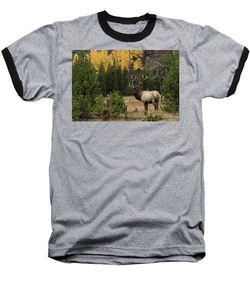 Master Baseball T-Shirt