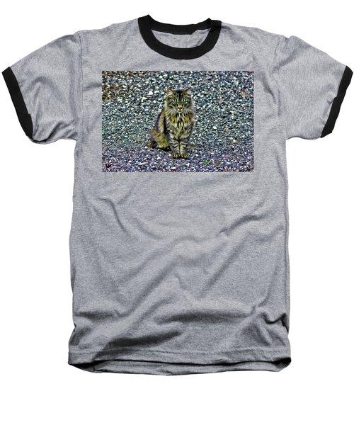 Mattie The Main Coon Cat Baseball T-Shirt