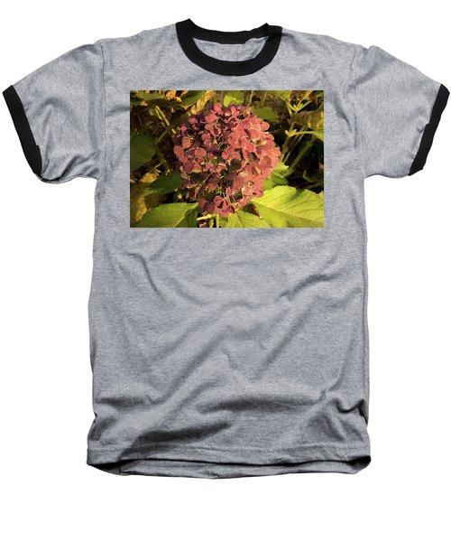 Mature Hydrangea Blossom Cluster Baseball T-Shirt