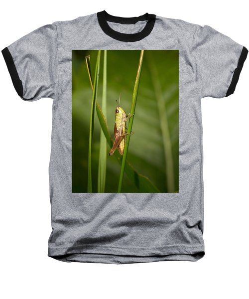 Baseball T-Shirt featuring the photograph Meadow Grasshopper by Jouko Lehto