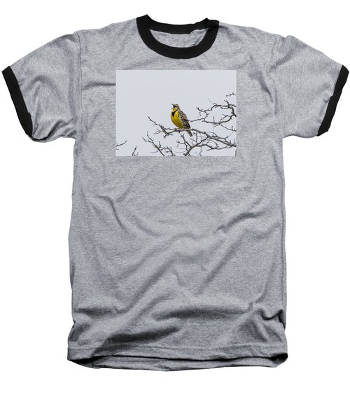 Meadowlark In Tree Baseball T-Shirt by Marc Crumpler