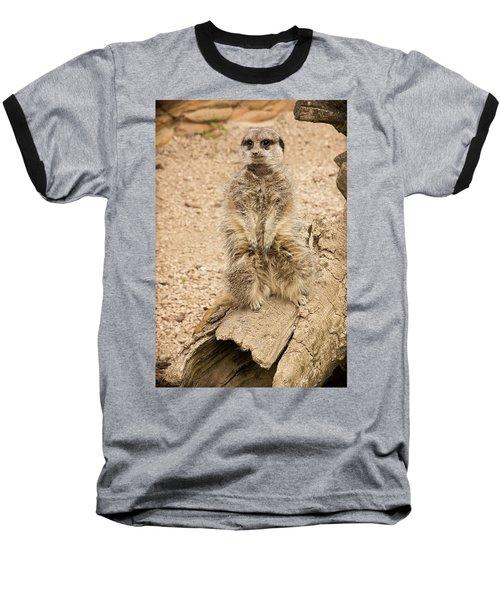Meerkat Baseball T-Shirt