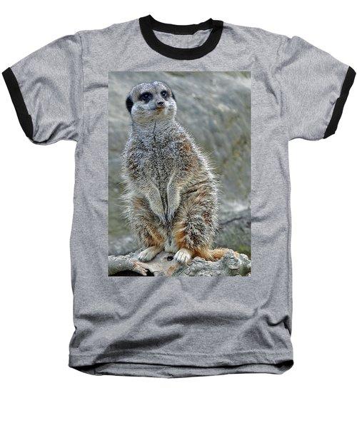 Meerkat Poses Baseball T-Shirt