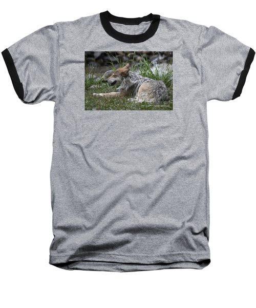 Baseball T-Shirt featuring the photograph Mexican Wolf 20120714_112a by Tina Hopkins